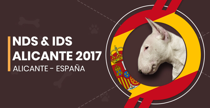 NDS & IDS Alicante 2017.
